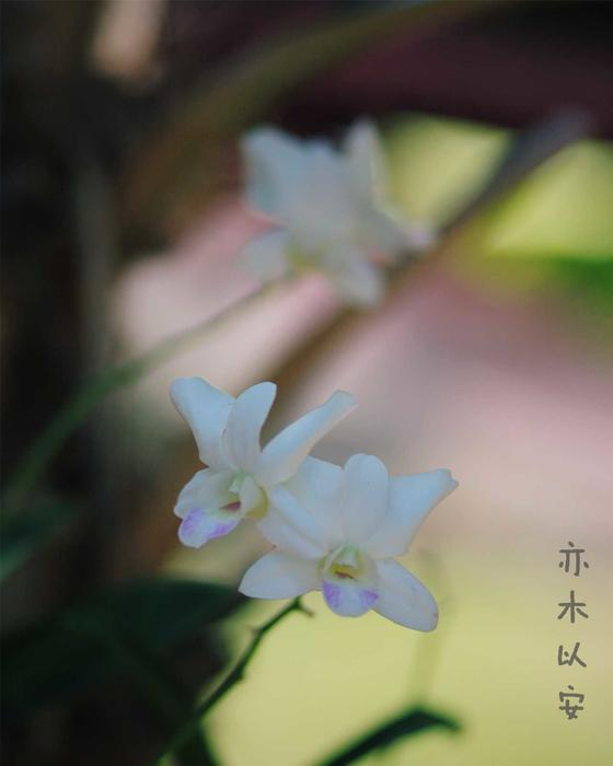 2016麗网络购彩修片img_1028.jpg