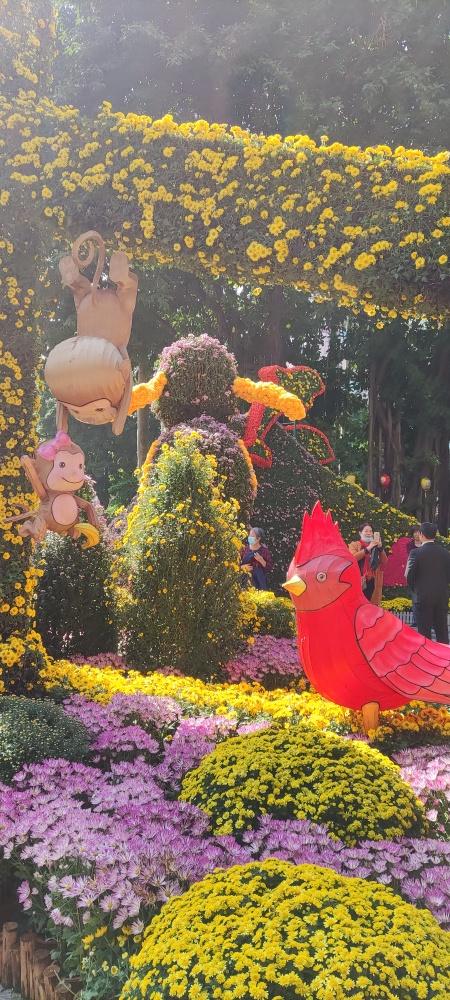 去賞菊啦喂!第61屆羊城菊會有特色滿滿創意