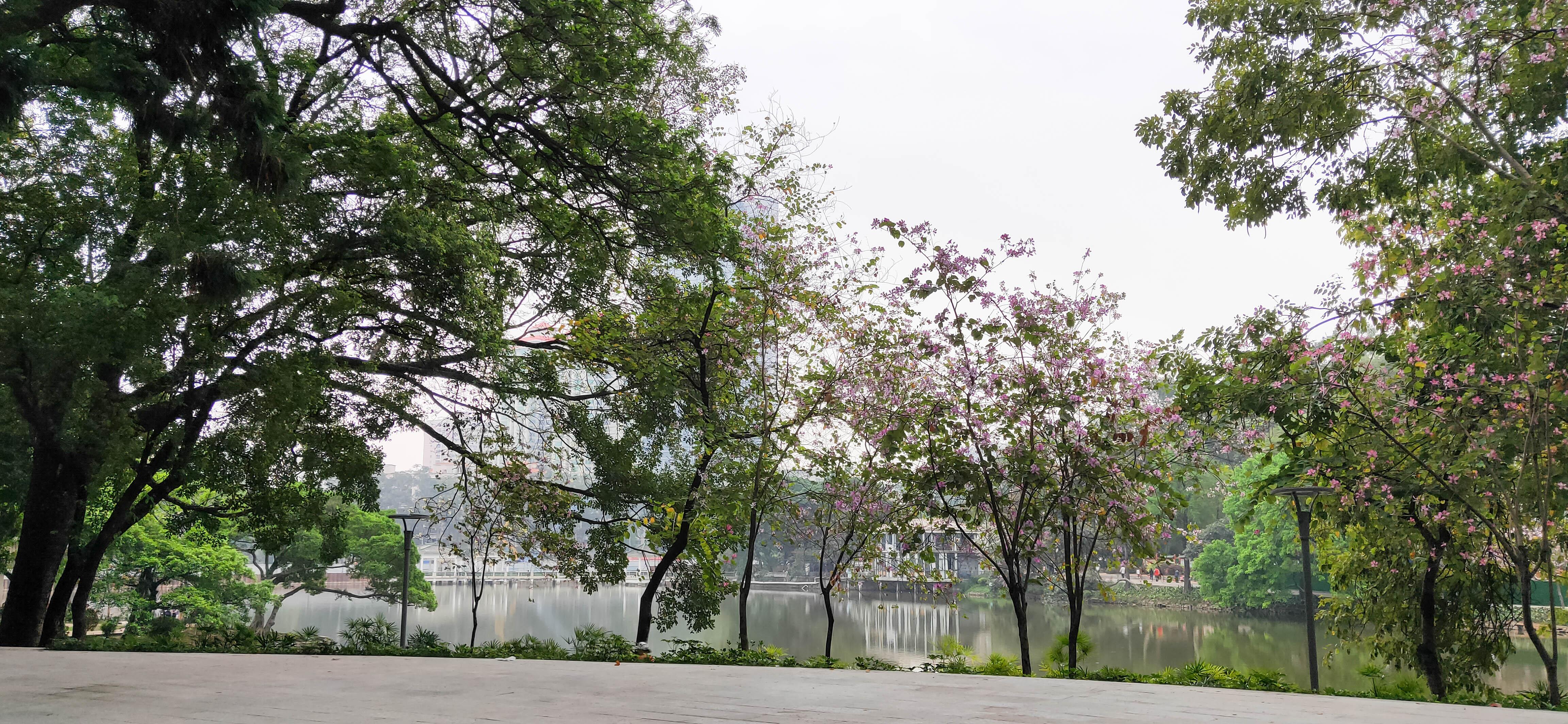 天河公园赏花溜娃,野餐拍照热闹非常
