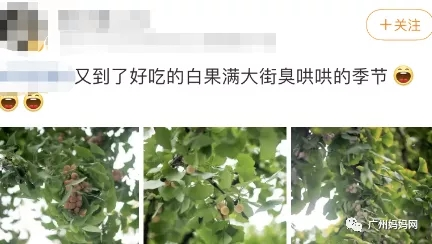 广州常见的这种果子,有孩子吃完中毒身亡!