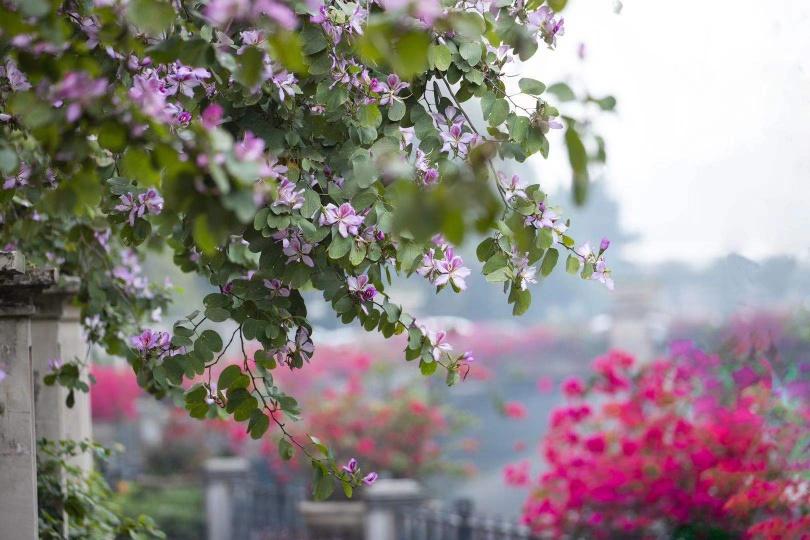 花花随手拍!小区里各种鲜花开爆了