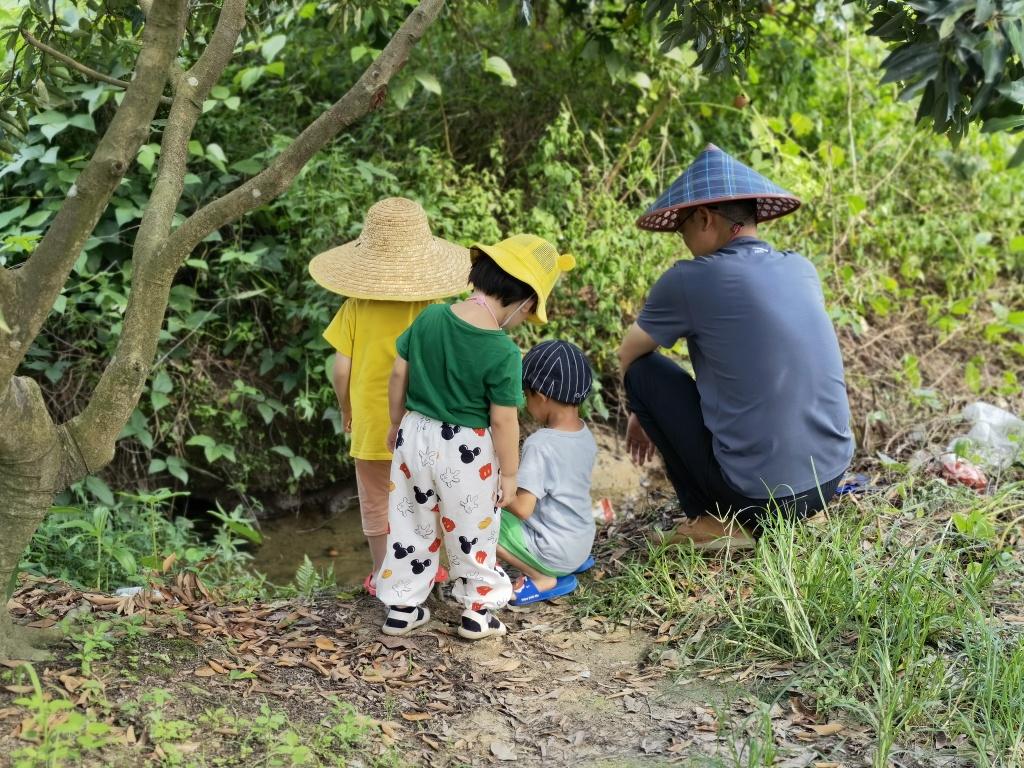 广州郊区摘果叹荔枝,农家生活好惬意