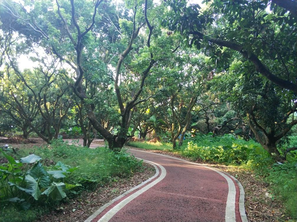 林荫小道散步吸氧,来增城鹤之洲湿地公园