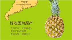 徐闻菠萝9斤29.9元包邮