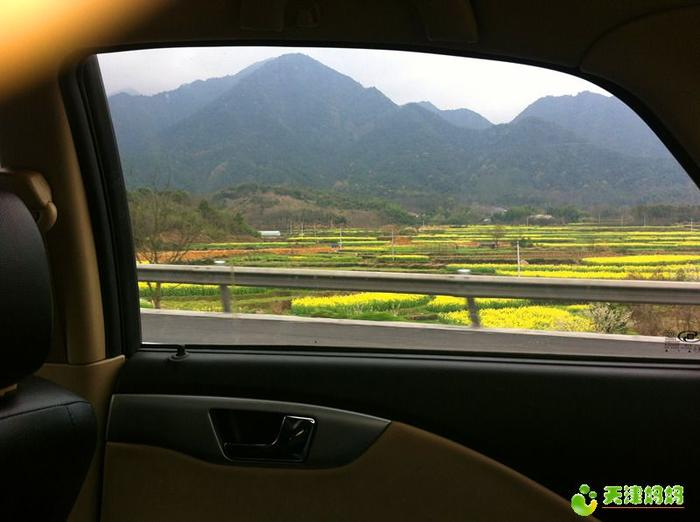 高速路上油菜花.jpg