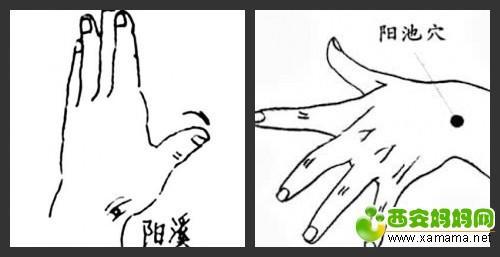 阳池穴_conew2.jpg