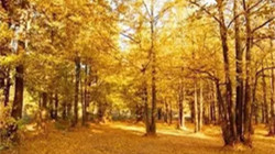 秋冬季鄭州的顏值擔當 竟然是這6個地方